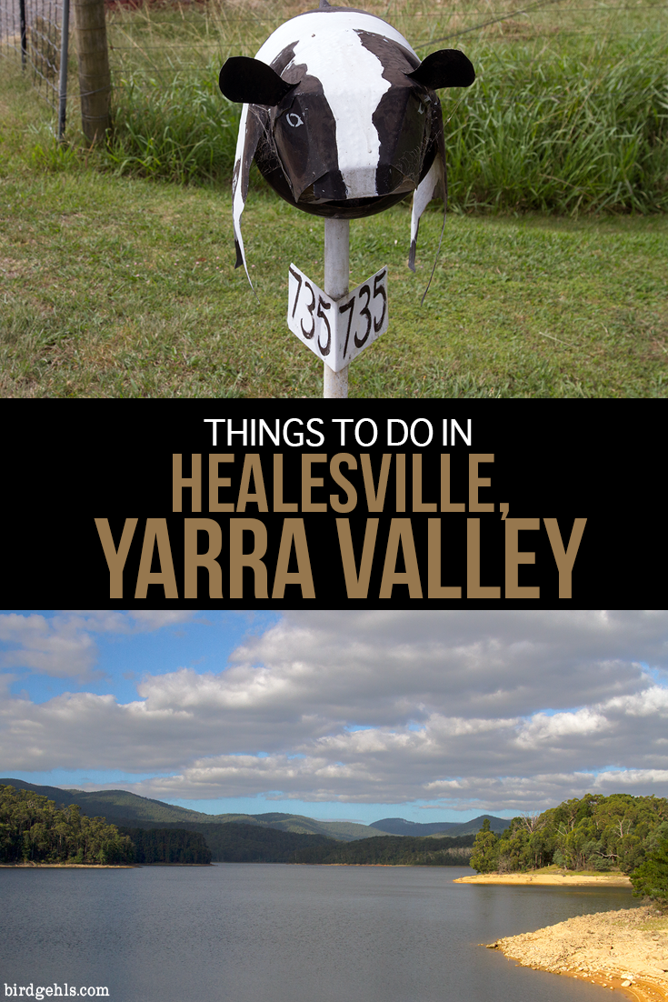 Here are some things to do in #Healesville, in the heart of the Yarra Valley. From wine tasting, to close encounters with local wildlife, it's the perfect destination for couples, families, friends and solo travellers. / #Victoria / #Australia / Australia Travel / Local Travel Victoria, Australia / Wine Tasting Australia / Yarra Valley Wine Tasting / Healesville Sanctuary /  Maroondah Reservoir Park / Maroondah Dam / Innocent Bystanders / Yarra Valley Chocolaterie /