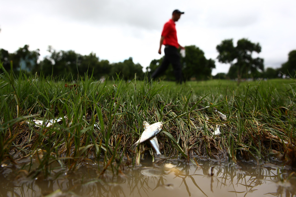 . Cameron Percy of Australia walks past dead fish on the 11th fairway during Round Two of the AT&T Byron Nelson at the TPC Four Seasons Resort Las Colinas on May 29, 2015 in Irving, Texas.  (Photo by Tom Pennington/Getty Images)