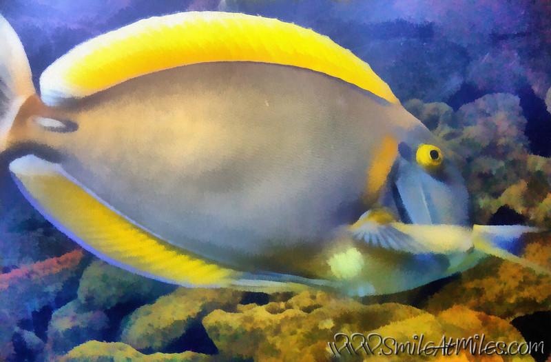 yellowfish_sept 061_DAP_Realism.jpg