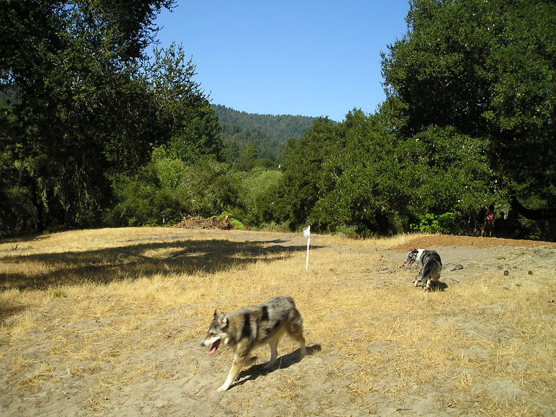Tika and Boost explore the nonagility field off to the side where it's OK to potty and explore.
