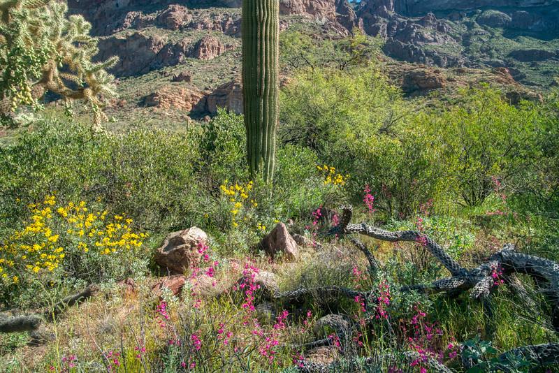 Organ Pipe Cactus 2020-24.jpg