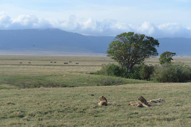East Africa Safari 408.jpg