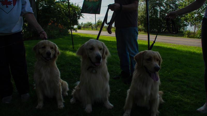 PuppyParty18-589.jpg