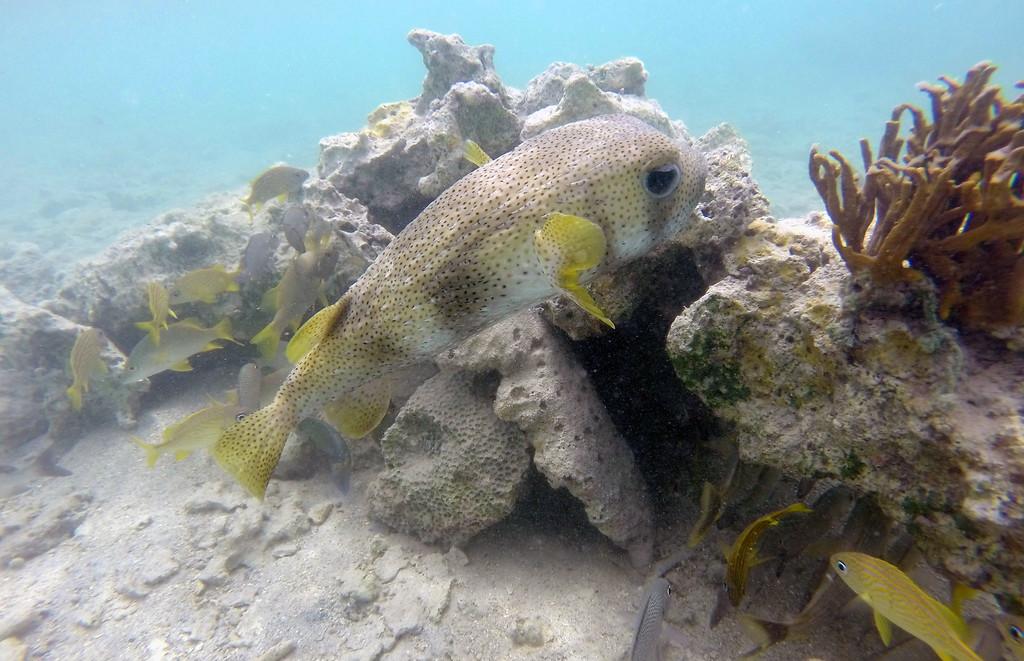 Best Snorkeling in the Caribbean - Cas Cay - St Thomas, USVI