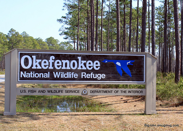 Okefenokee Swamp 2-27-11