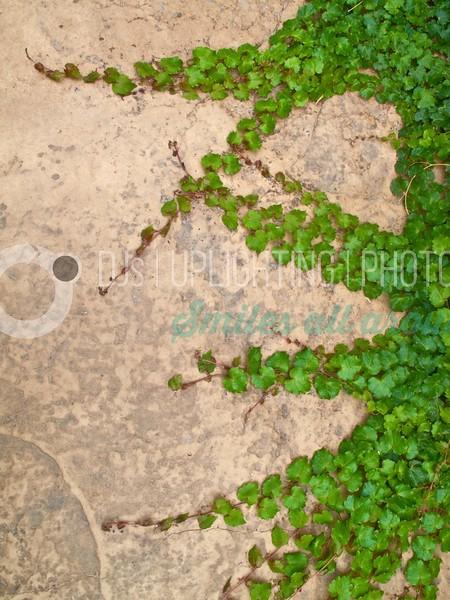 Ivy on the Wall_batch_batch.jpg