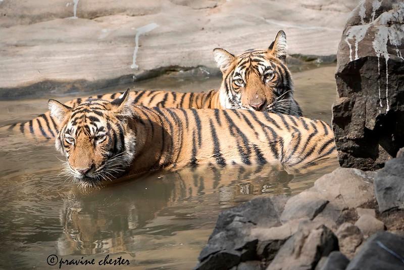 Siblings in the water