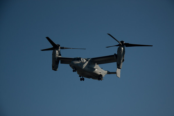 VA Beach Osprey