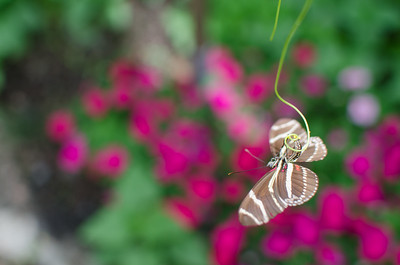 2015 Hershey Gardens Butterfly House