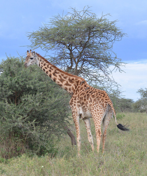 East Africa Safari 297.jpg