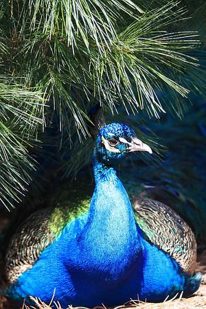 04-17-2009 - Southwick Zoo