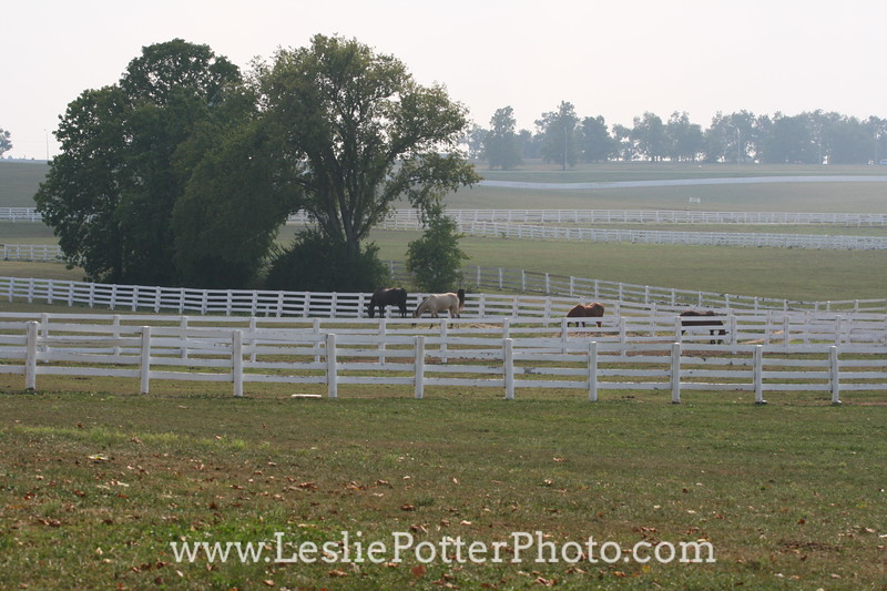 White Fencing at the Kentucky Horse Park