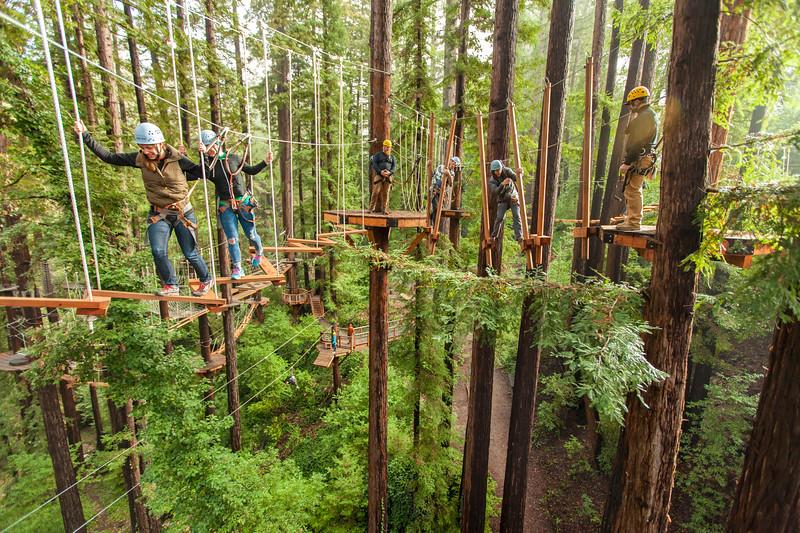 Sequoia Aerial Adventure 6.jpg