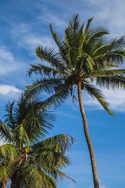 Maui 5D-86.jpg