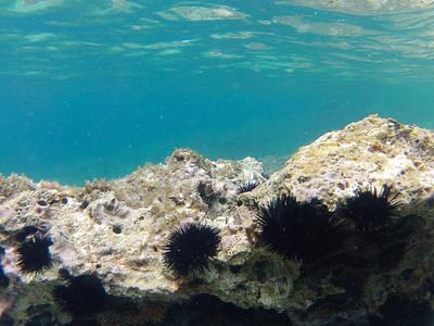 Cres 2015 Underwater