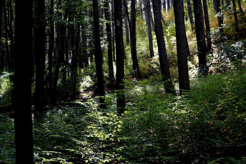 forest Dingmans Falls.jpg