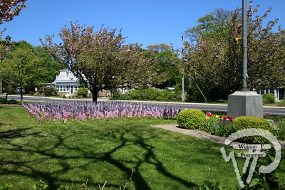 ACADEMY PLACE ~ flags . . . tulips — Orleans, MA — 2020