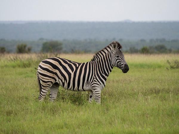 Kruger National Park Game drives from Lukimbi Lodge