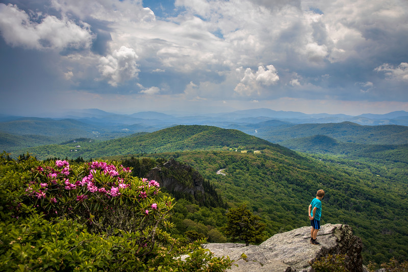 Grandfather Mountain Bloom