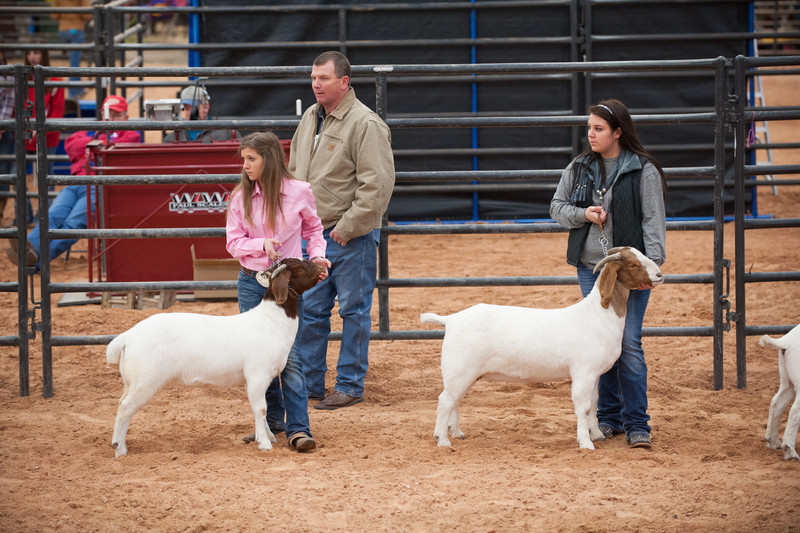 Hays_County_Show-6599.jpg