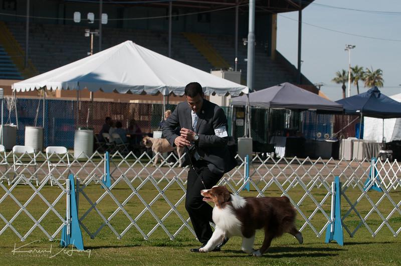 20170205_Australian Shepherds_Lost Dutchman Kennel Club-192.jpg