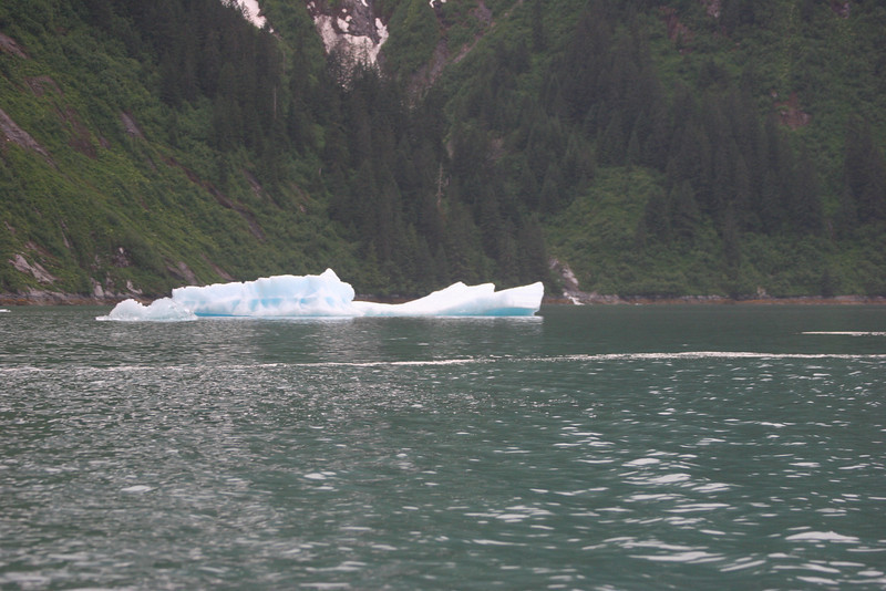 ice in Tracy Arm