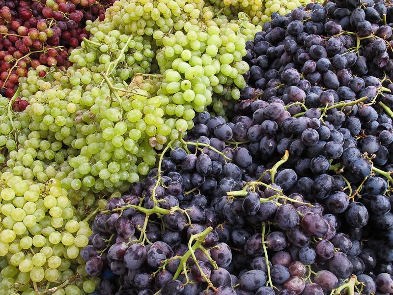 sep12_grapes.jpg