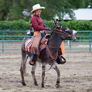 Donkey Reining