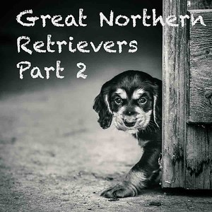 Great Northern Retrievers Part 2