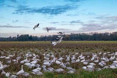 Riefel Bird Sanctuary - 11-28-16