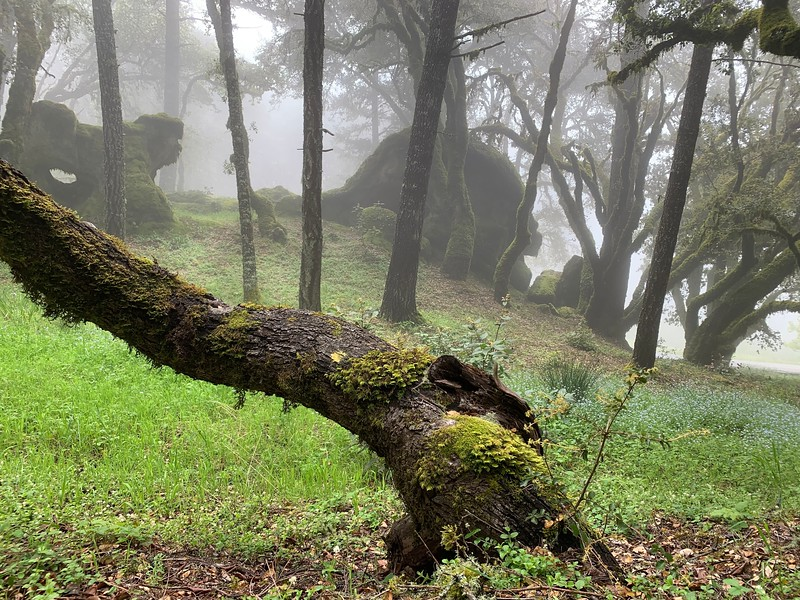 Misty Middle Earth