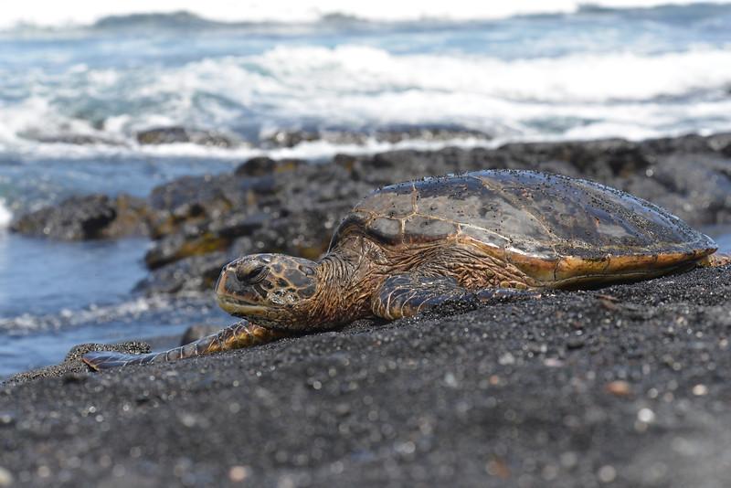Big Island - Hawaii - May 2013 - 12.jpg