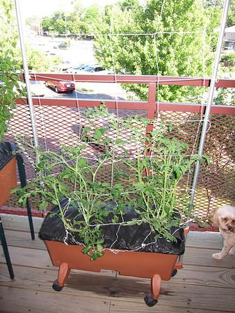 Garden Watch 2011