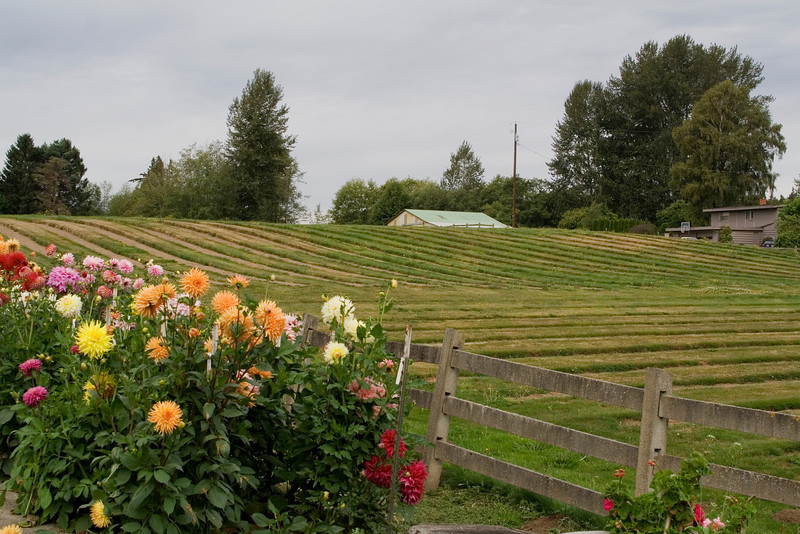 Old Dahlia Fields.jpg
