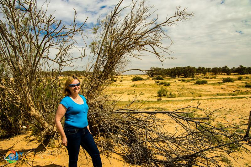 Israel's Desert of Zin in the springtime