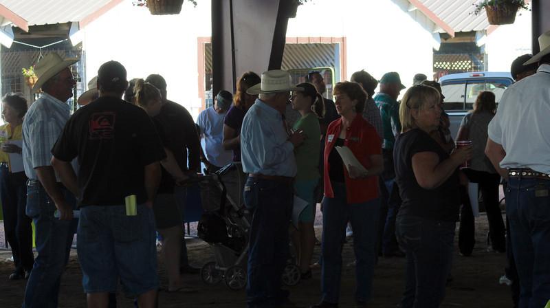 Junior Livestock Auction at the 2012 Fair