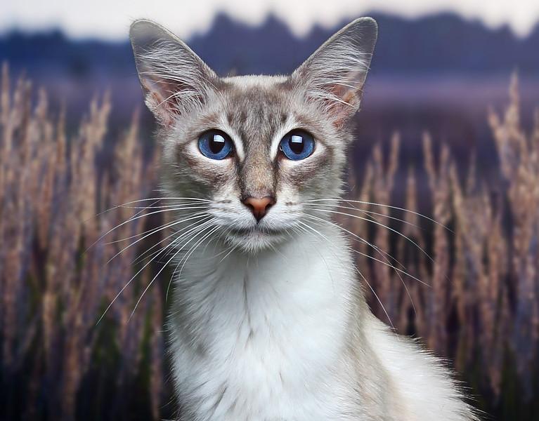 Saule-cat-11b.jpg