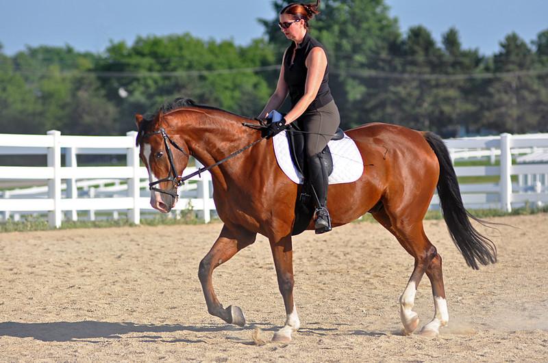 Horses July 2011 233a.jpg