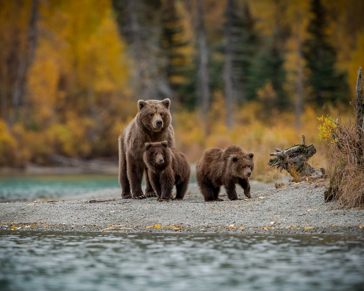 Mom with 2 cubs.jpg