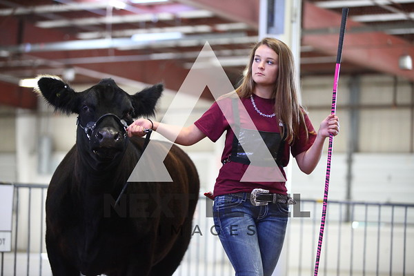 Big East 2013 Youth Steer Ring Shots