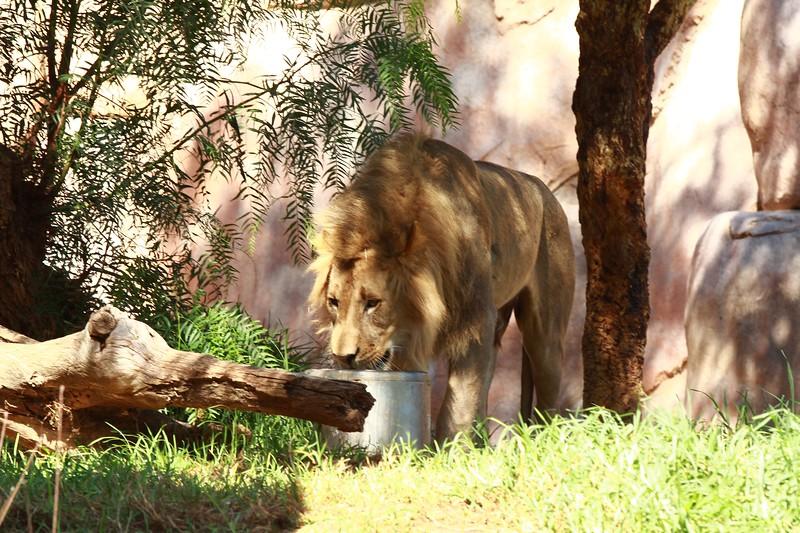 San Diego wild animal pakr 201700076.jpg