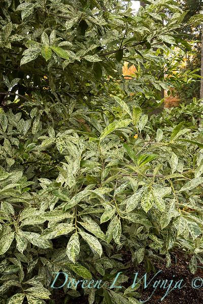 Dietrick fall garden_2097.jpg