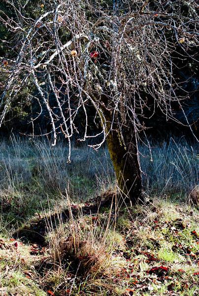 apple-trees-20.jpg
