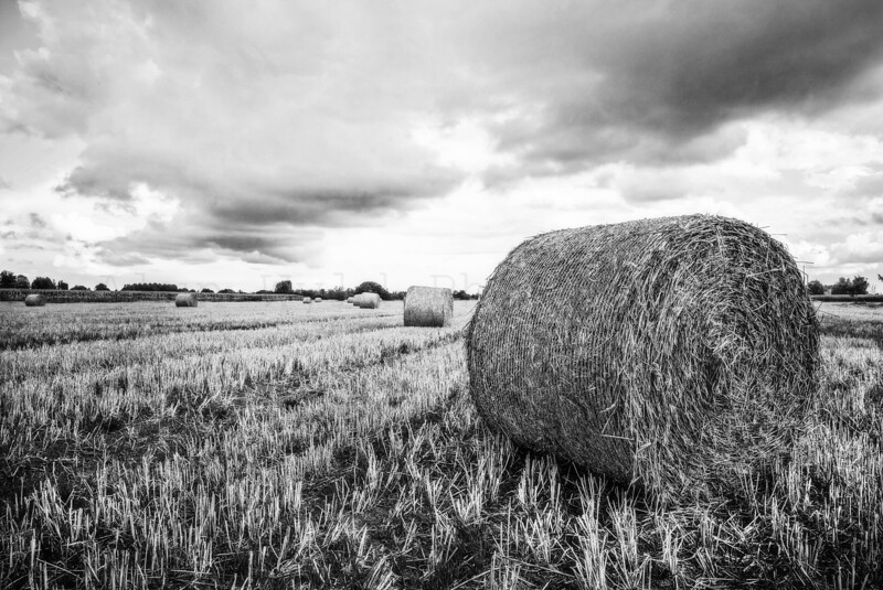 Haybales in Brittany.jpg