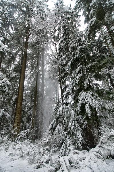 Snow day 1 237.jpg