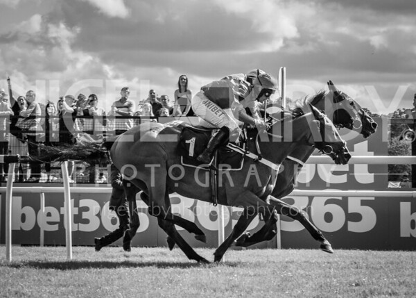 Uttoxeter Races - Sun 30 June 19