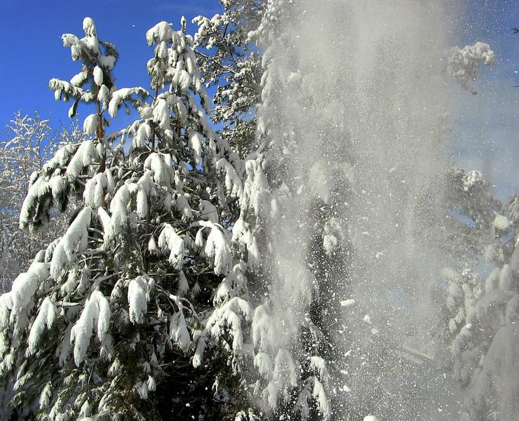 snow falling trees IMG_1766 snow_ktk.jpg