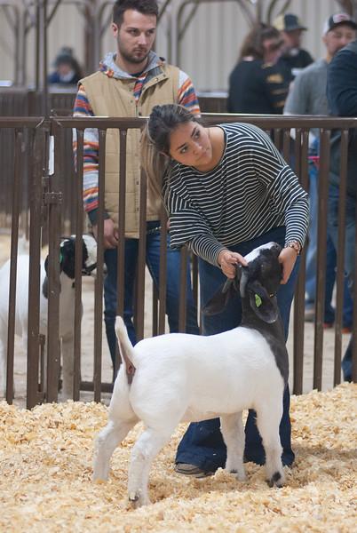 kay_county_showdown_goats_20191207-162.jpg