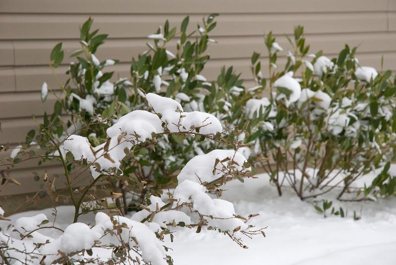 SnowFeb13-5.jpg