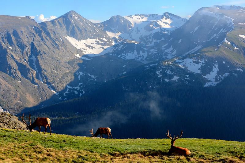 Mountain Realm